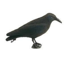 Photo Appelant corbeau